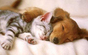 кошка, сон, котенок, собака, щенок