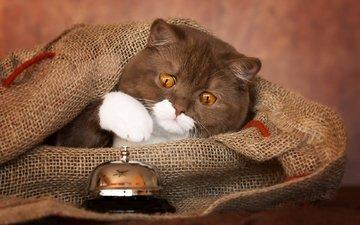кот, мордочка, кошка, звонок, мешковина