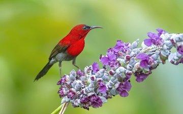 ветка, фон, птица, птичка, зеленый фон, нектарница