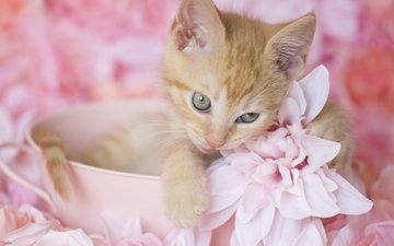flowers, kitty, red, cute