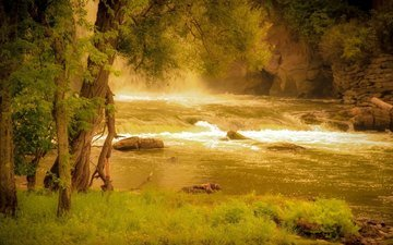 grass, trees, river, rocks, nature, shore, forest