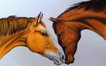 рисунок, пара, лошади, кони, нежность, живопись