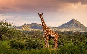 небо, горы, природа, жираф