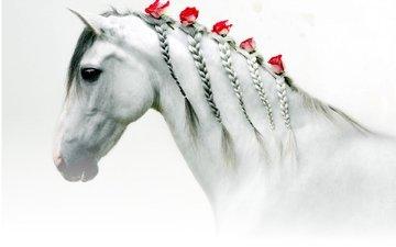 цветы, лошадь, розы, белая, голова, косички