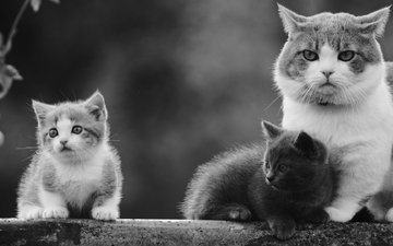 cat, black and white, kitty, cats, kids, kittens