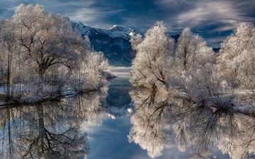 trees, lake, snow, nature, winter, reflection