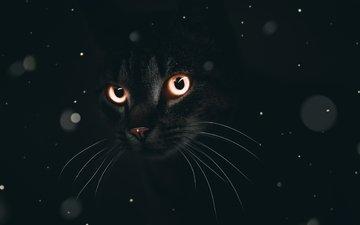 eyes, cat, muzzle, look, black background