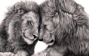 art, predator, big cat, love, leo