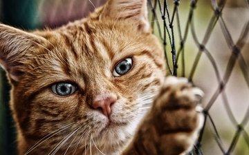 cat, muzzle, look, mesh, paw, netting