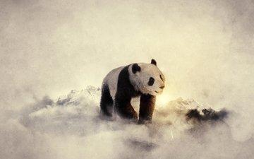 животные, панда, медведь, бамбуковый медведь, большая панда