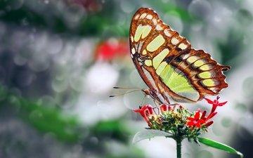 фото, цветок, бабочка, крылья, красивая, ozturk mustafa