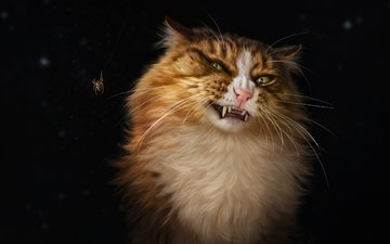 насекомое, кот, усы, кошка, паук