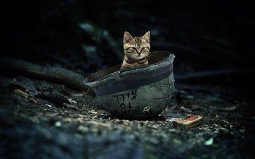 кот, кошка, шлем