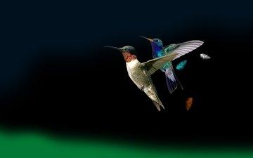 крылья, птицы, колибри