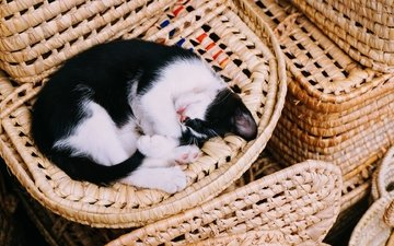 кот, кошка, сон, котенок, корзина