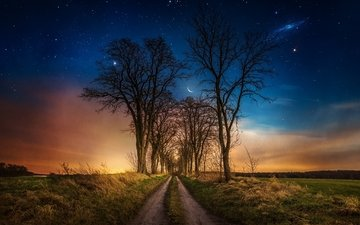 road, grass, night, trees, stars, the moon