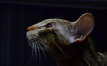 кот, мордочка, кошка, взгляд