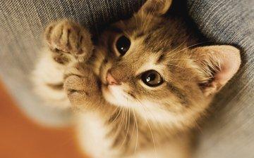 кот, котенок, лежит
