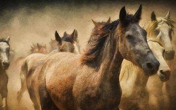 лошади, кони, пыль, бег, табун