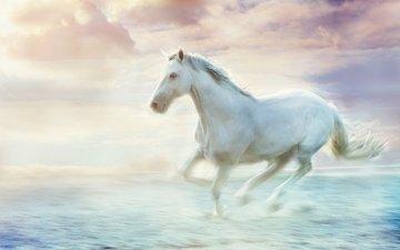 небо, лошадь, облака, туман, обработка, белый, дымка, конь, грива, скачет, копыта