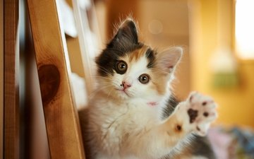 cat, muzzle, mustache, look, kitty