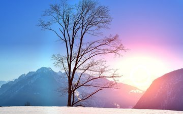 trees, mountains, snow, nature, sunset, winter