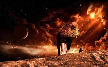 космос, огонь, лев, львёнок