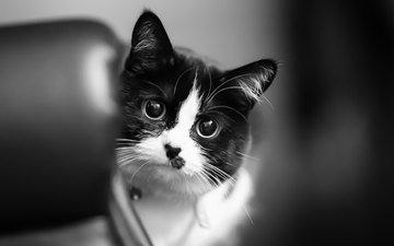 глаза, кот, кошка, взгляд, животное