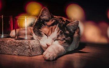 кот, кошка, сон, животное, стаканы, боке