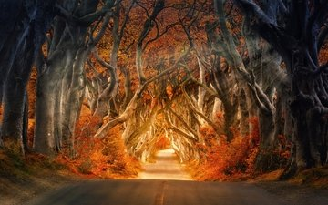 light, road, trees, nature, forest, rays, trunks, autumn, the way