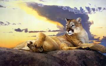 the sky, art, figure, clouds, the evening, nature, stones, sunset, pose, paws, look, stay, puma, cougar, nancy glazier
