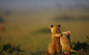 трава, природа, животные, лев, львята, детеныши