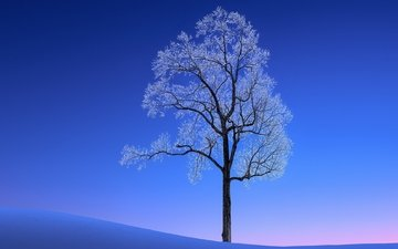 snow, tree, winter, landscape, frost