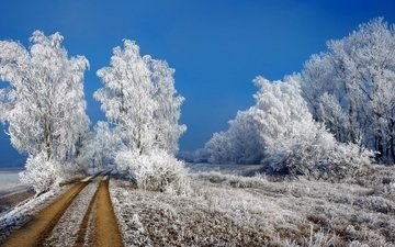 road, grass, trees, snow, nature, winter, landscape, the bushes, frost