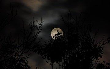 небо, облака, ветка, природа, листья, ветви, луна, силуэт, темнота, сумерки, темно