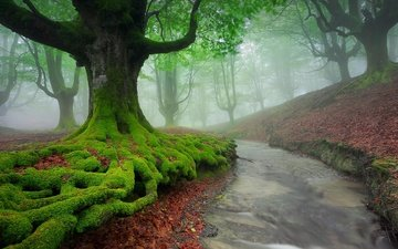 trees, river, nature, forest, landscape, fog, moss, spain