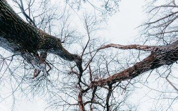 деревья, лес, ветки, вид снизу
