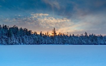 the sky, clouds, trees, snow, nature, forest, sunset, winter, spruce, twilight