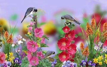 цветы, графика, птички