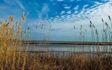 небо, трава, облака, вода, озеро, природа, пейзаж, песок, горизонт, береговая линия.
