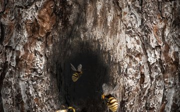 дерево, насекомое, пчела, шершень, дупло, улей