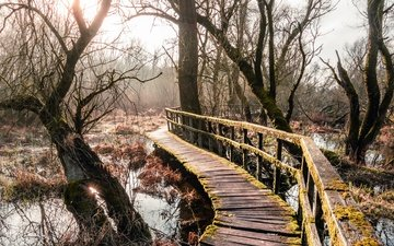 the sky, trees, water, river, nature, forest, landscape, branch, bridge, moss, vegetation, wooden bridge
