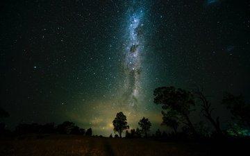 деревья, космос, звездное небо, млечный путь