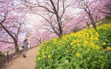цветы, цветение, девушка, пейзаж, парк, япония, весна, сакура