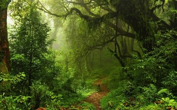 trees, nature, forest, landscape, fog, path, thickets