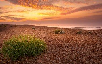 небо, природа, берег, растения, закат, солнечный свет