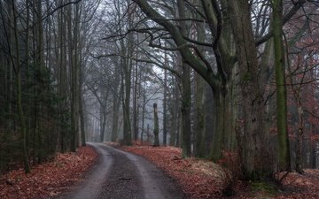 road, trees, nature, forest, leaves, autumn