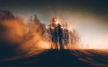 trees, morning, fog