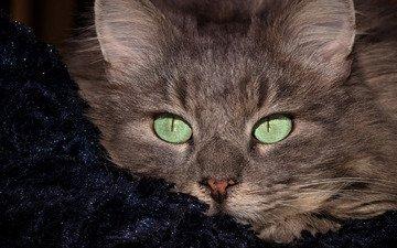 портрет, кот, мордочка, кошка, взгляд