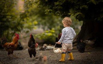 мальчик, яйца, боке, курицы
